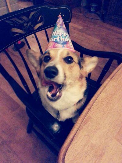 Everyday Joy Theloveofmylife Mydog Mydogsbirthday