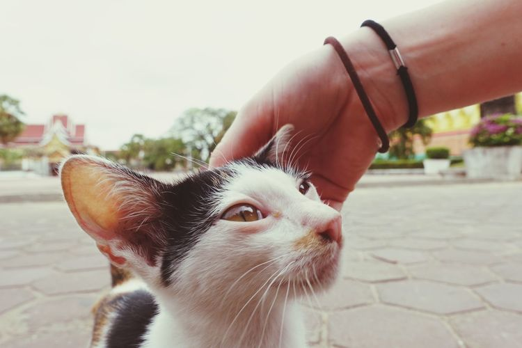 Close-up of hand holding cat against sky