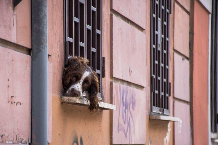 Portrait of dog on window