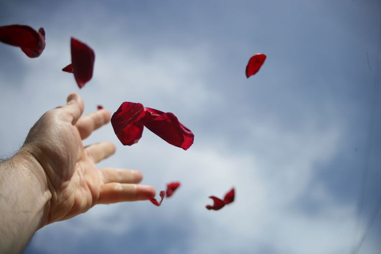 Cropped image of hand holding red flowers against sky