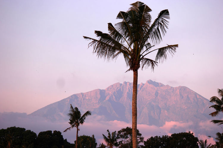 Palm Tree Tree Tropical Climate Sky Plant Mountain Scenics - Nature Beauty In Nature Tranquil Scene Tranquility Growth Nature Non-urban Scene Silhouette No People Mountain Range Idyllic Tree Trunk Outdoors Trunk Coconut Palm Tree Tropical Tree Mountain Peak