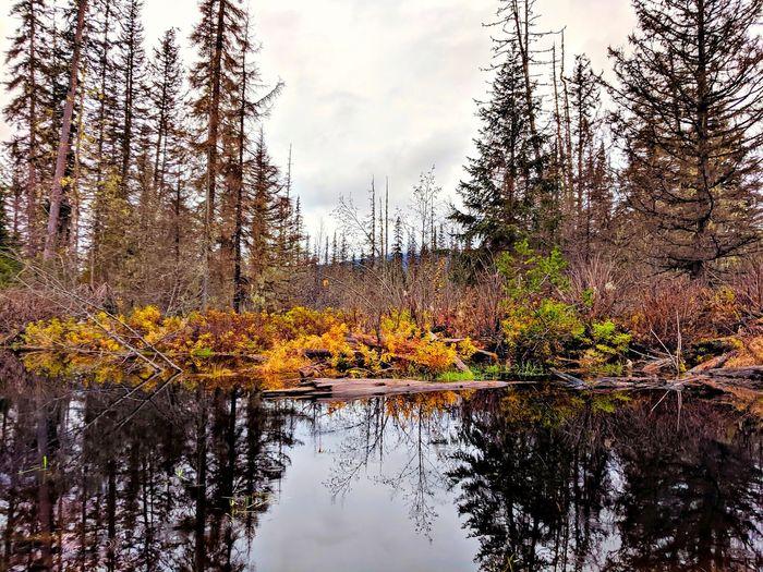 beaver pond in
