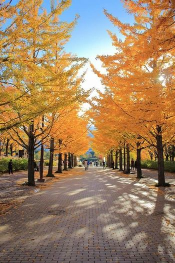 今年の紅葉 Japan EOS Autumn Leaves