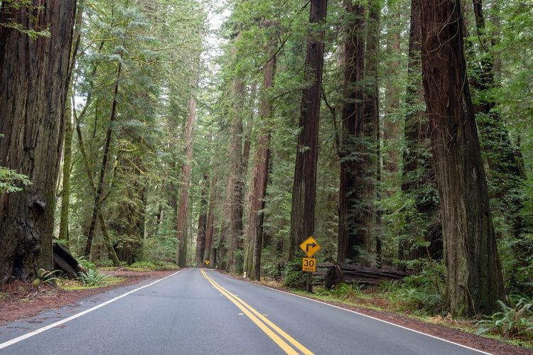 Landscape of road (Avenue of the Giants) leading through Redwood trees in California Avenue Of The Giants California Redwood Forest Redwood Trees Road Plant Tree Transportation The Way Forward Forest Direction Diminishing Perspective Green Color Trunk Tree Trunk Scenics - Nature Sign No People Marking Road Marking Growth Nature Land Beauty In Nature