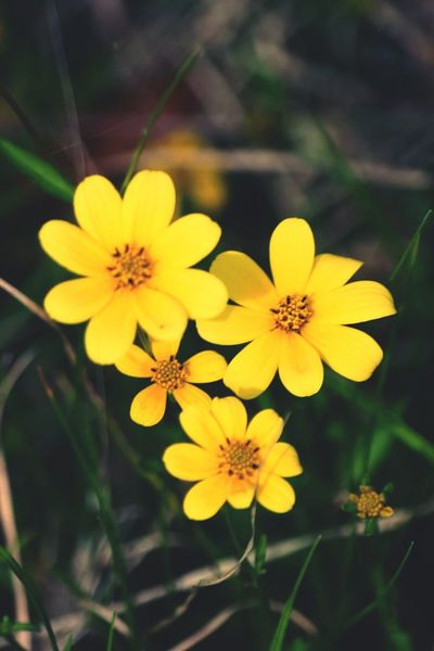 Wild Flowers Yellow Flower Macro_flower Urban 3 Admiring Nature's Beauty Hobbyphotography Canonphotography Beautiful Flowers From My Point Of View