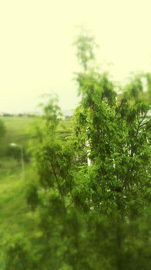 Hello World tree love nature