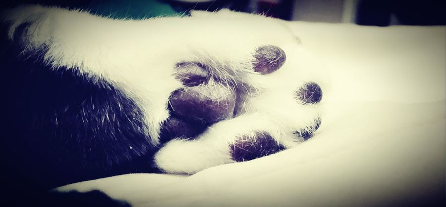 Precious Kitty Paw Paws And Purrs Cat Feets Adorableness Soft Cute Pets Love Cat Feet Relaxing Stretched Out