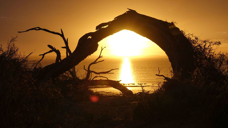 Silhouette tree against sea during sunset