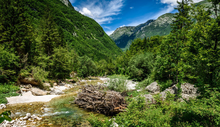 Idyllic mountain river in Lepena valley, Soca - Bovec Slovenia. Piled up wooden dam resembling beaver dam on river Lepenca. Beautiful landscape scene with forest, mountains and river in Slovenia, Europe. Green Lepena Lepenca Nature Slovenia Soca River Trees Alps Beauty In Nature Beaver Dam Bovec Dam Forest Green Color Julian Alps Mountain Nature Obstacle River Soca Stream Valley Water Waterfall Woods