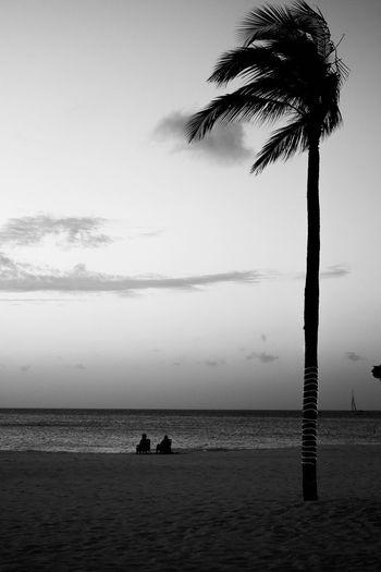 Silhouette palm tree on beach against sky
