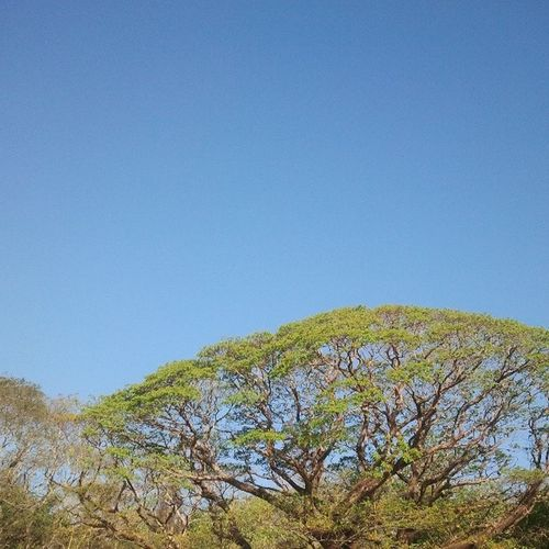 I just love Trees as they fit with a Clearbluesky . Natureisthebestdesigner Artisticeye reflection