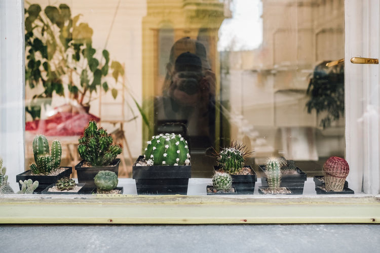 Potted plants outside shop