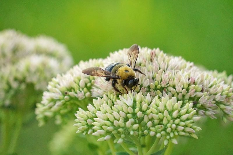 Summer Pollination Flower Flower Head Perching Pollination Bee Insect Thistle Close-up Animal Themes Plant Honey Bee Bumblebee Symbiotic Relationship In Bloom Animal Antenna Blooming
