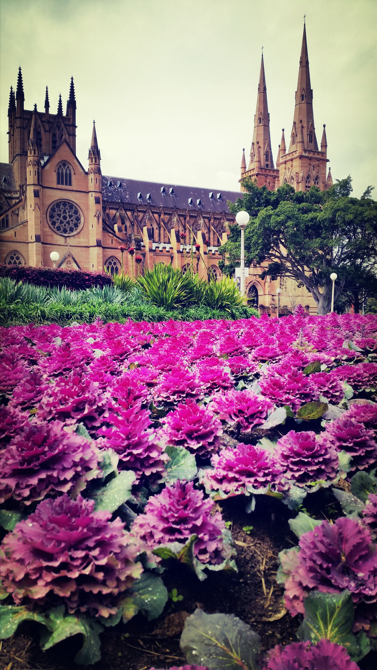 flower, building exterior, architecture, built structure, freshness, fragility, pink color, sky, growth, blooming, plant, place of worship, religion, petal, beauty in nature, nature, history, day, outdoors, famous place