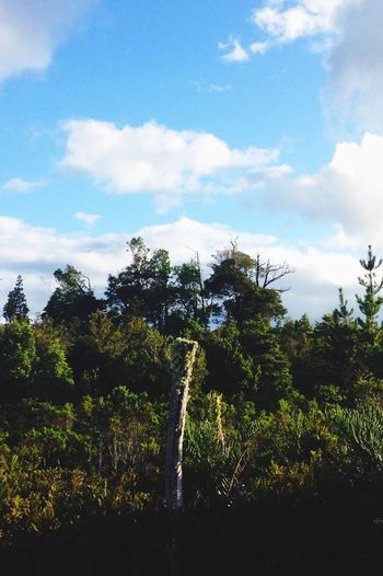 Woods Forest Green Coihue Native Trees Sky Blue Clouds Hugging A Tree Outdoors Landscape Nature Colours Of Nature Woods Out Of The Woods