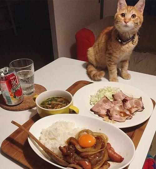 """家ごはん 3日目のカレー カレー Piopio Pio ピオ 氷結 氷結とちおとめ Cat Neko ねこ 猫 ねこ 茶トラ Cats 結局3日目のカレー最終形態は残ったルーで""""玉ねぎとウインナーのカレー炒め""""&鍋にこびったルーに水菜とベーコン入れて""""カレースープ""""で鍋舐め倒すレベルで食べ尽くしましたとも…😅💦ちなみに""""氷結とちおとめ""""いちごジャムのようなフレーバーでめっちゃ美味い👍"""
