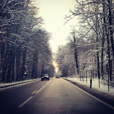 Ontheroad Snowtree Firstsnow Allee