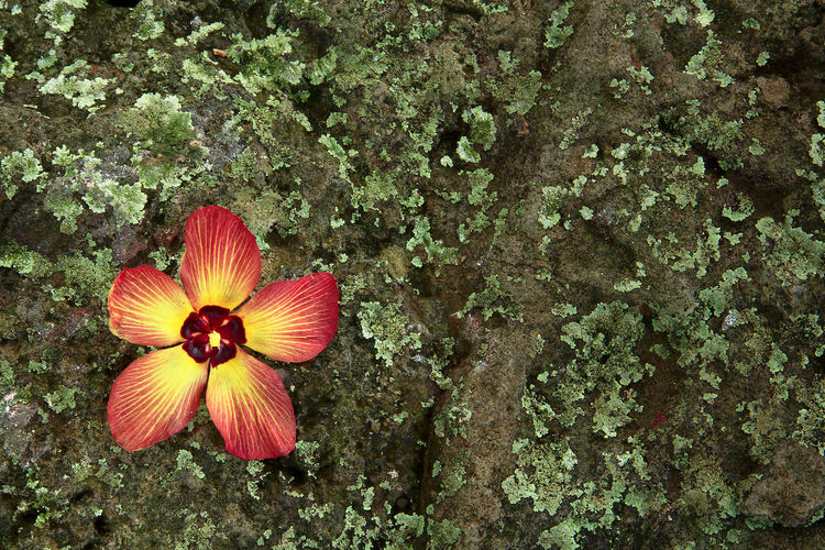 Directly above shot of red flowering plants