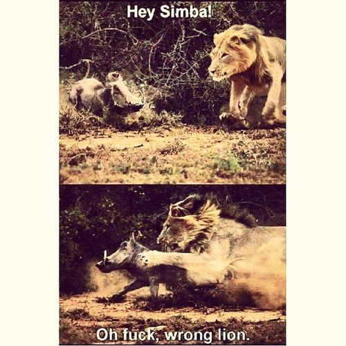 Mademyday Hilarious Funny Lmfo lol