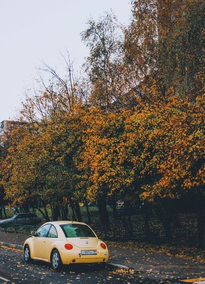 Paint The Town Yellow Car No People Nature Autumn Tree Day Sky Tree Tree Branch