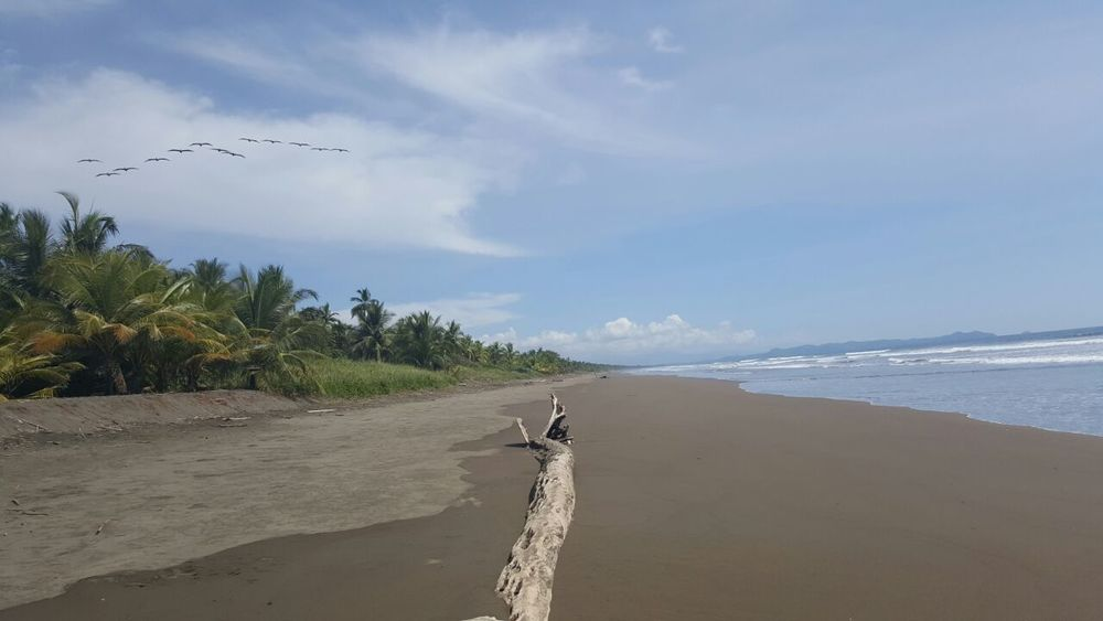 Beach Sea Sand Water Tranquility Outdoors Horizon Over Water Palm Tree Beach Photography Beauty In Nature Check This Out Palo Seco Costa Rica❤
