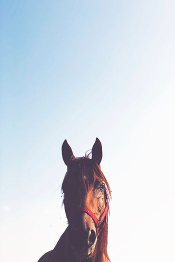 Portrait of woman with horse against clear sky
