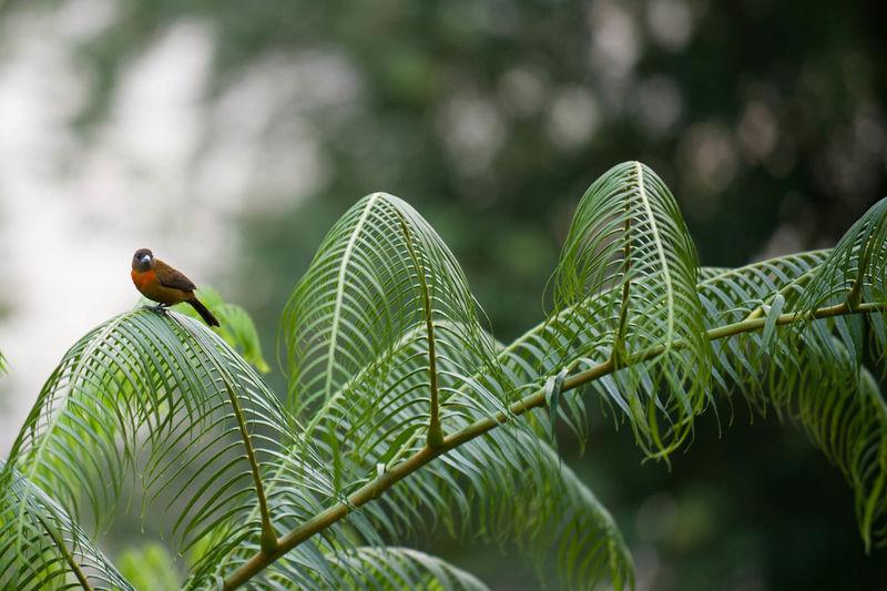 Bird sitting on tree branch