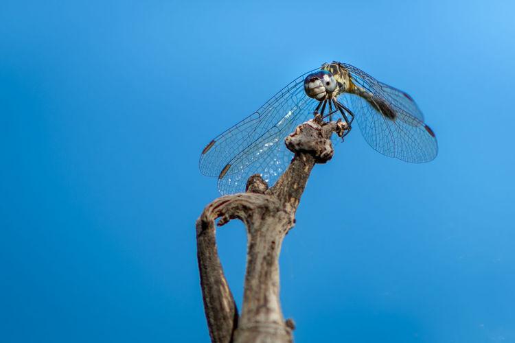 Dragonfly no