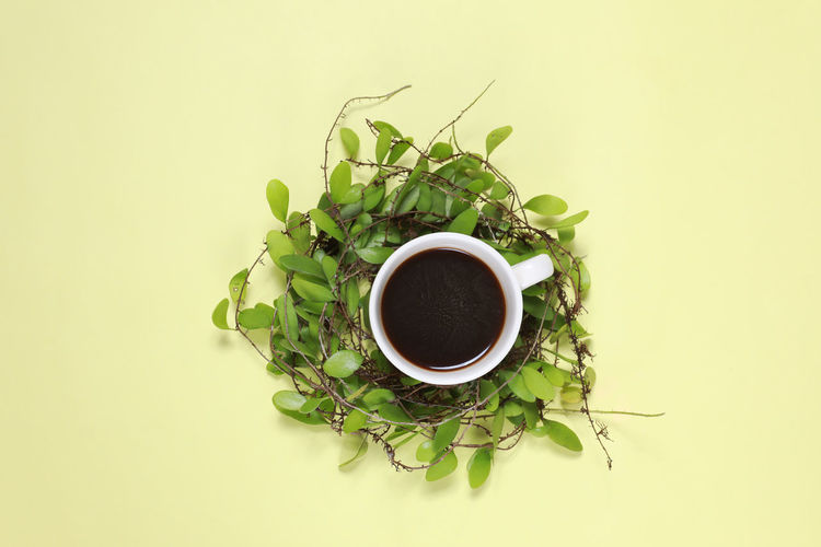 Cup Refreshment Drink Food And Drink Mug Freshness Directly Above Indoors  Studio Shot Leaf Plant Part Green Color Plant Still Life Coffee Coffee - Drink No People White Background Close-up Coffee Cup Tea Cup Crockery