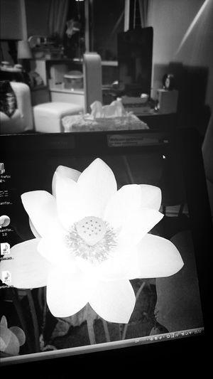 鏡 花 mirror flower Art Hong Kong Get Inspired