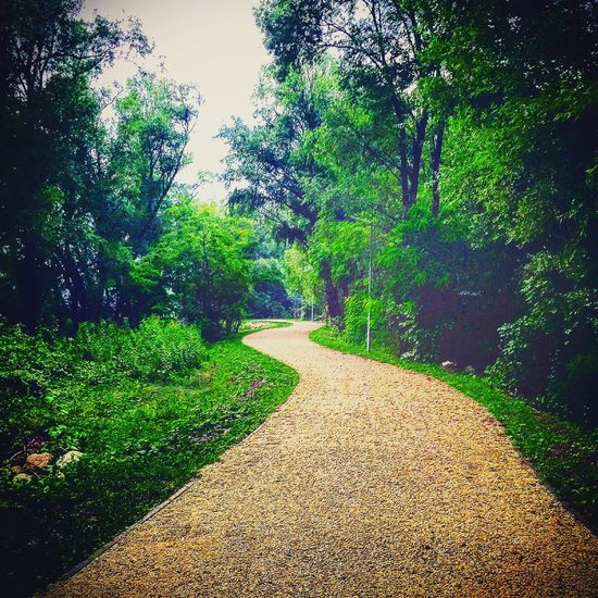 Beauty In Nature Grass Green Color Growth Lush - Description Nature Outdoors Pathway Plant The Way Forward Tranquil Scene Tree Winding Road