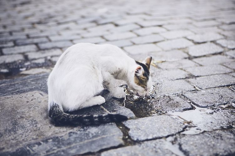 Cat drinking water on footpath