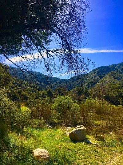Morning hike. Hike Hiking Hiking Adventures Hiking Trail Southern California Santa Clarita Chapparal Family Family Hike Love Hiking IPhoneography