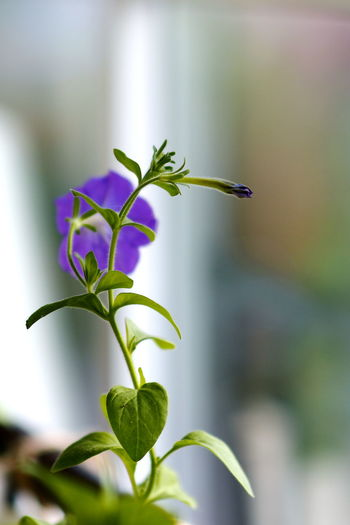 Beauty In Nature Close-up Day Flower Flower Head Focus On Foreground Fragility Freshness Green Color Growth Leaf Nature New Life No People Outdoors Plant