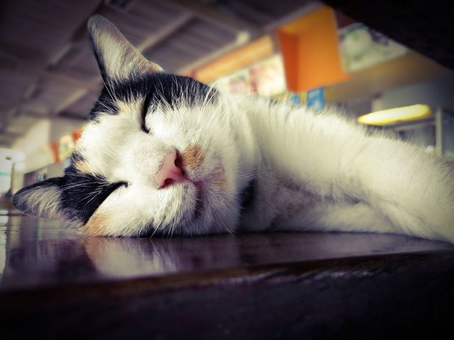 Cat Domestic Cat Pets Domestic Animals One Animal Feline Animal Themes Eyes Closed  Mammal Sleeping No People Indoors  Animal Head  Whisker PortraitLying Down Close-up Relaxation Day Sleeping Table Cute Lovely Alone
