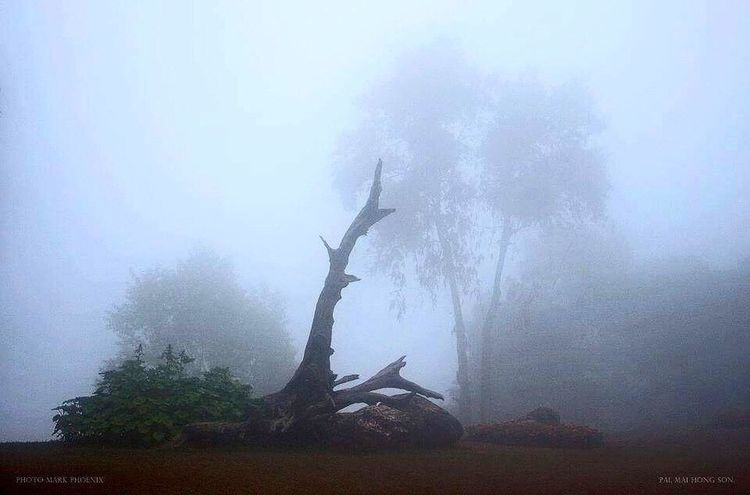 Sillhouette Tree Trunk Design Misty Morning Trees And Sky Dead Tree Mai Hong Son Northern Thailand