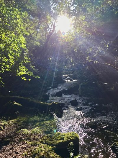 Sunshine through the trees River Clydach Gorge Woods Trees River Side Sunbeam Lens Flare Sunlight Beauty In Nature Nature Tranquil Scene Tranquility