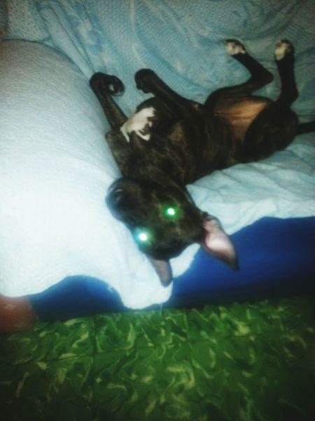 Mi perra está colgadisima jajajajaj EyeEm Best Shots Dog Love Loveanimals Crazydogs