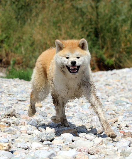Portrait of dog on rock