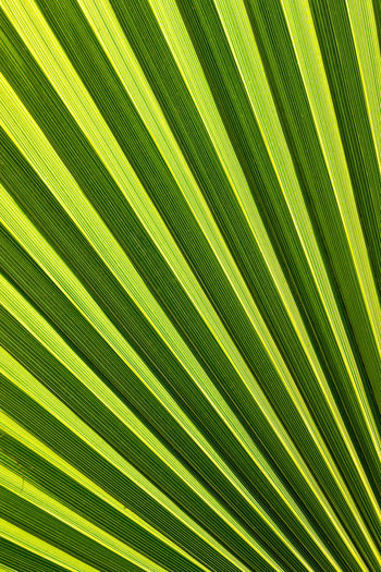 LINE Perspectives On Nature Shape Backgrounds Biology Close-up Complexity Day Development Fern Freshness Frond Green Color Growth Leaf Nature Outdoors Palm Leaf Palm Tree Striped Sunbeam Sunlight Texture Textured  Tree