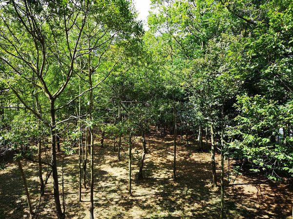 Tree Backgrounds Full Frame Sunlight Green Color