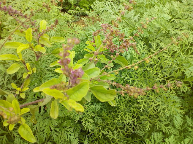 Green Color Nature High Angle View No People Plant Grass Outdoors Beauty In Nature Growth Animals In The Wild Animal Themes Fragility Day Flower Head Close-up Freshness Leaf