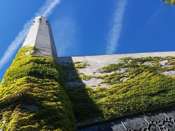 Low angle view of plants against building