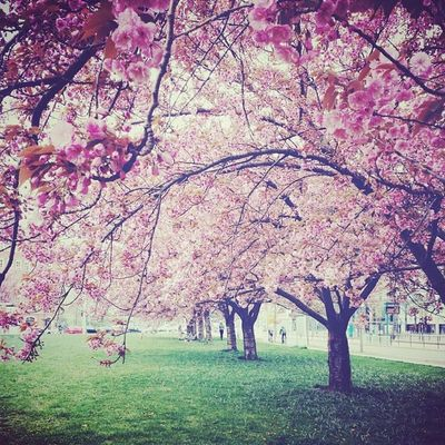 Springinthecity Pinktrees Greengrass Outandabout views thisisleipzig