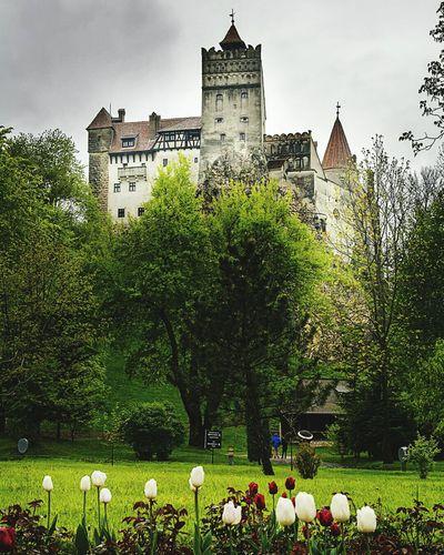 Dracula's castle Draculascastel
