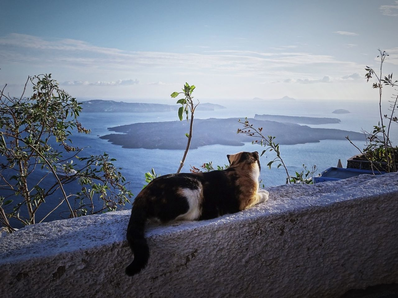 domestic animals, pets, animal themes, one animal, mammal, sky, no people, domestic cat, outdoors, nature, plant, sitting, mountain, day, growth, feline, beauty in nature, water
