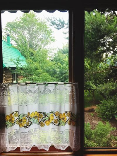 Window Tree Plant Day No People Growth Indoors  Nature Leaf Built Structure Architecture Close-up Freshness Dacha