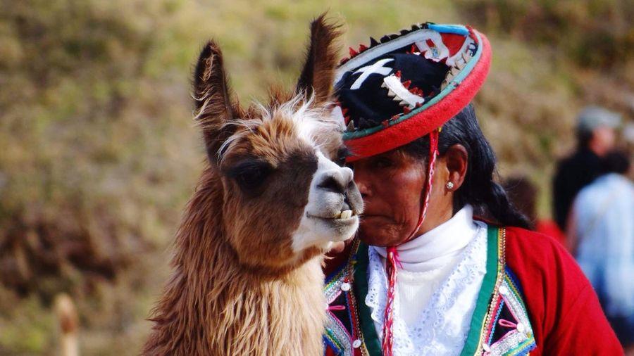 Woman In Inca Clothing Standing By Llama