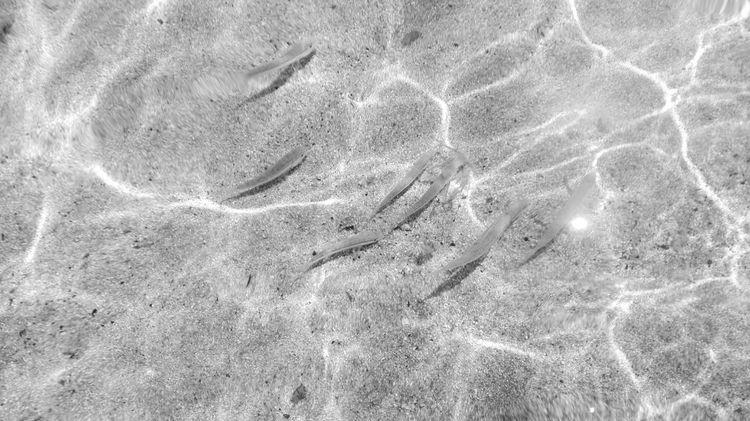 Monochrome Photography Hello World Sardinia Fhish Relaxing Trasparence Water Water Reflections Sea Animls Sardiniaphotoexperience Sea And Fish Animal Animals Reflection Black&white Black And White