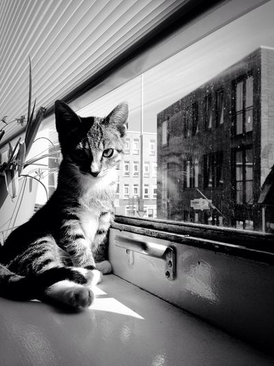 Cat Kitten 🐱 Blackandwhite Kitty Kitten Catphotography Cat🐱🐱